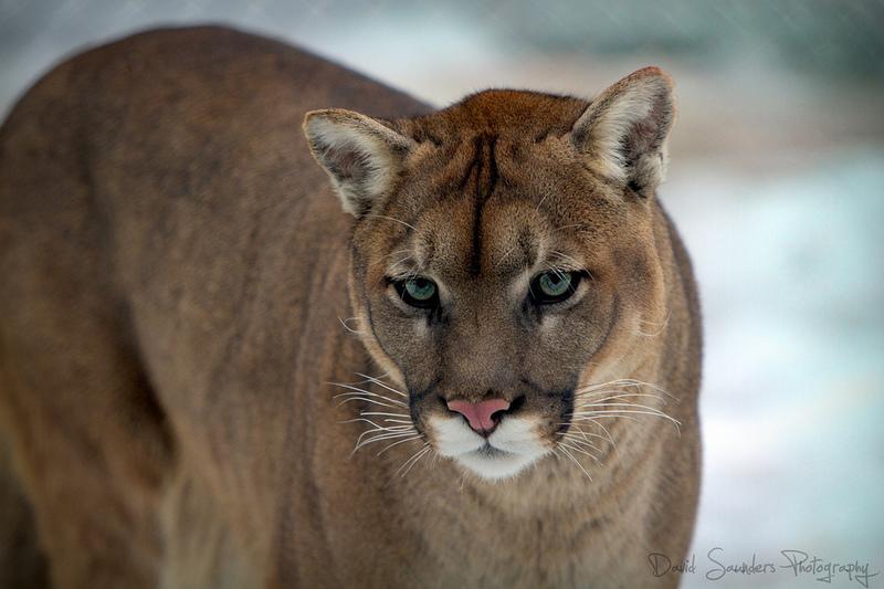Cougar de 60 ans baise avec un jeune de 20 ans - 1 1