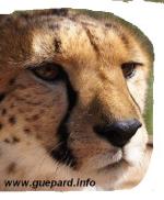 guepard.info